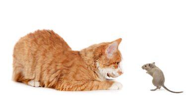 ネズミ駆除の超音波はペットに悪影響を及ぼす可能性あり!その理由について
