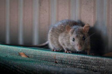 ネズミ退治の超音波装置はどこに置くと効果的?設置場所の例をご紹介