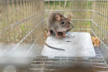 ネズミ駆除に超音波は有効?プロの目線で持続時間や有効性について解説