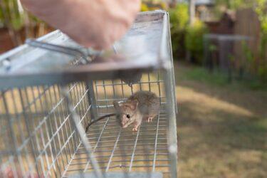 ネズミが原因で漏電火災発生?建物損傷?思わぬリスクについて