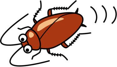 ネズミはゴキブリを食べる?エサや好物、侵入されやすい建物について