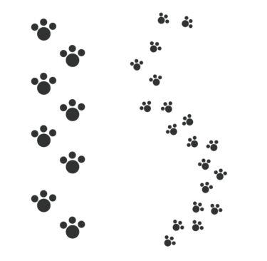 【アライグマ、イタチ、ハクビシン他】足跡やフンによる害獣の判別方法