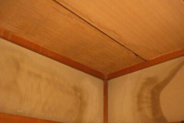 【ネズミ、アライグマ、ハクビシン】天井のシミは害獣が原因!?放置するとどうなるのか